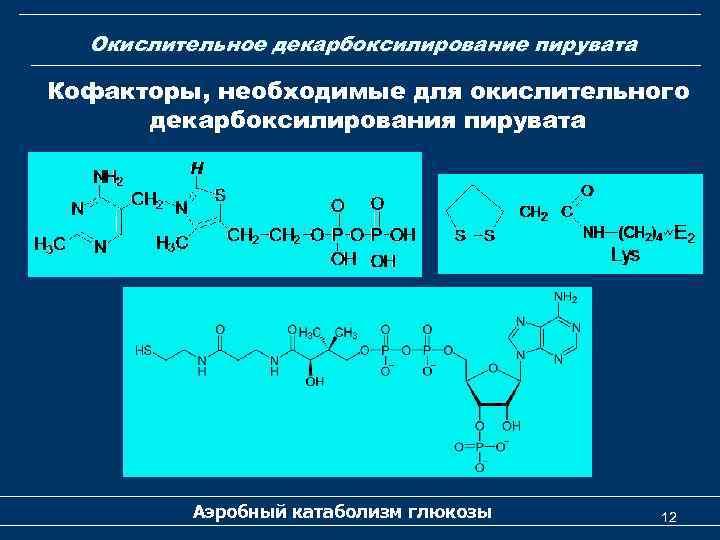 Окислительное декарбоксилирование пирувата Кофакторы, необходимые для окислительного декарбоксилирования пирувата Аэробный катаболизм глюкозы 12