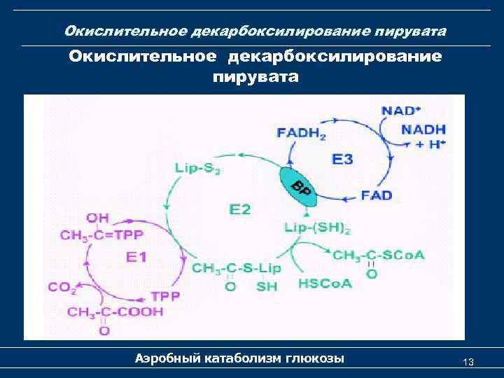 Окислительное декарбоксилирование пирувата Аэробный катаболизм глюкозы 13