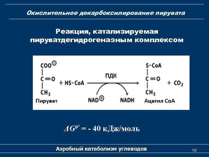 Окислительное декарбоксилирование пирувата Реакция, катализируемая пируватдегидрогеназным комплексом ΔG 0′ = - 40 к. Дж/моль