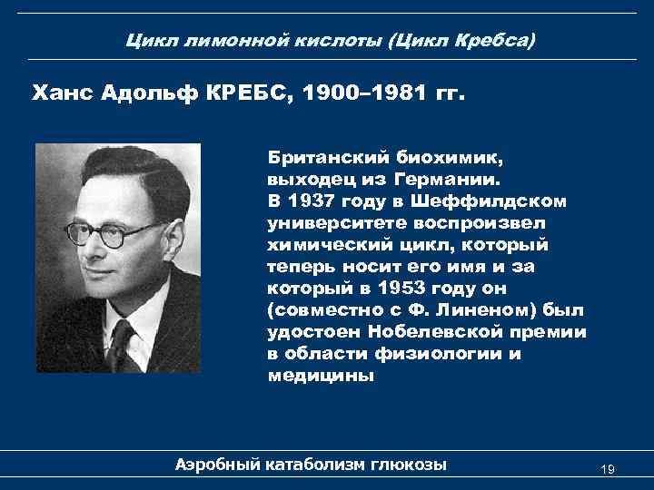 Цикл лимонной кислоты (Цикл Кребса) Ханс Адольф КРЕБС, 1900– 1981 гг. Британский биохимик, выходец