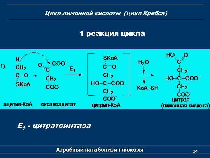 Цикл лимонной кислоты (цикл Кребса) 1 реакция цикла Е 1 - цитратсинтаза Аэробный катаболизм