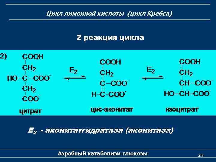 Цикл лимонной кислоты (цикл Кребса) 2 реакция цикла Е 2 - аконитатгидратаза (аконитаза) Аэробный