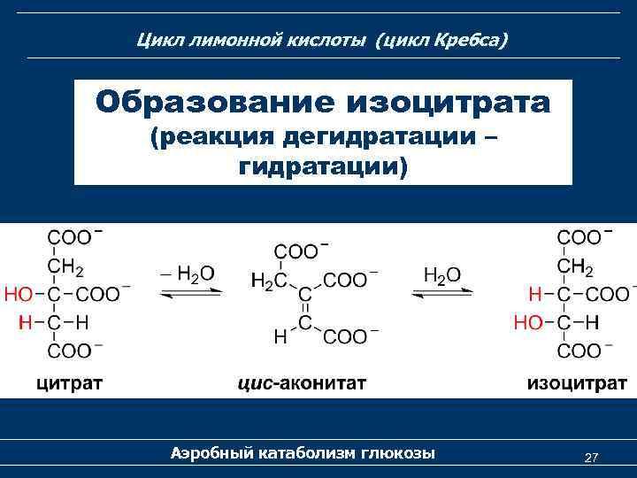 Цикл лимонной кислоты (цикл Кребса) Образование изоцитрата (реакция дегидратации – гидратации) Аэробный катаболизм глюкозы