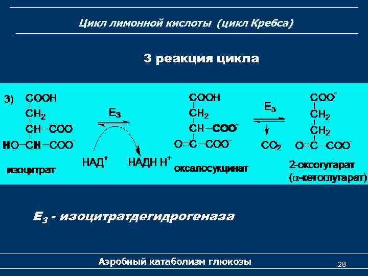Цикл лимонной кислоты (цикл Кребса) 3 реакция цикла Е 3 - изоцитратдегидрогеназа Аэробный катаболизм