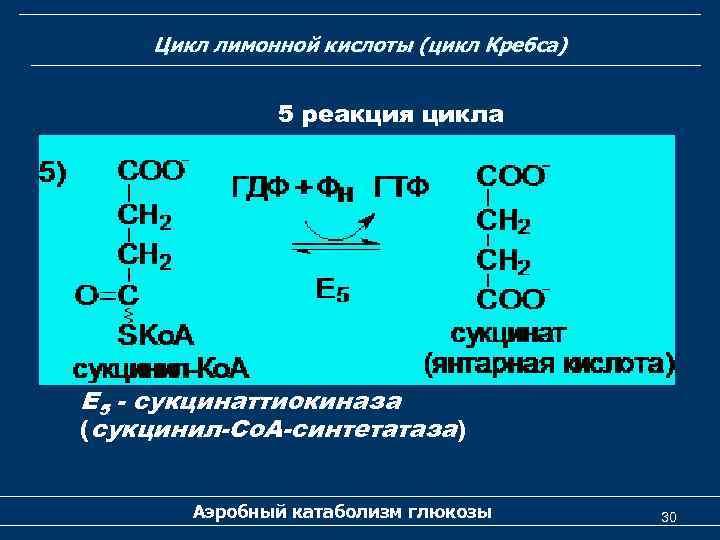 Цикл лимонной кислоты (цикл Кребса) 5 реакция цикла Е 5 - сукцинаттиокиназа (сукцинил-Со. А-синтетатаза)