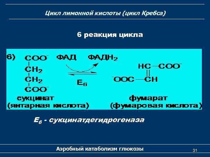 Цикл лимонной кислоты (цикл Кребса) 6 реакция цикла Е 6 - сукцинатдегидрогеназа Аэробный катаболизм