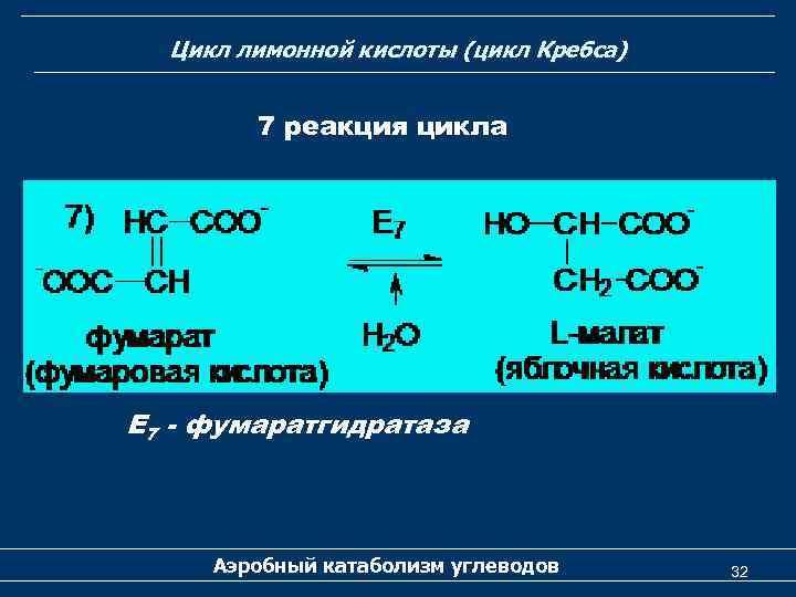 Цикл лимонной кислоты (цикл Кребса) 7 реакция цикла Е 7 - фумаратгидратаза Аэробный катаболизм