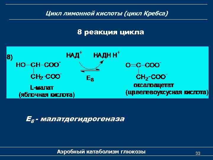 Цикл лимонной кислоты (цикл Кребса) 8 реакция цикла Е 8 - малатдегидрогеназа Аэробный катаболизм