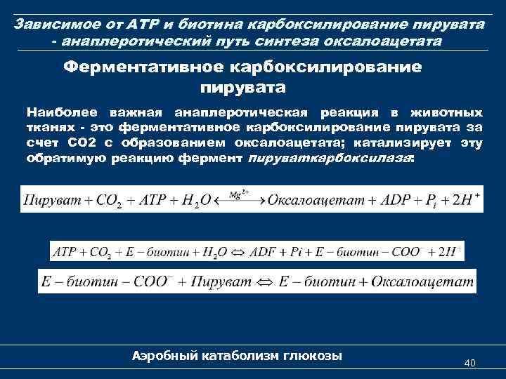 Зависимое от АТP и биотина карбоксилирование пирувата - анаплеротический путь синтеза оксалоацетата Ферментативное карбоксилирование