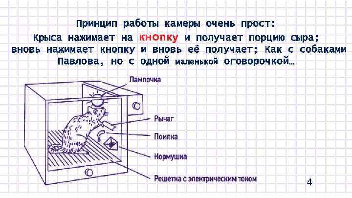Принцип работы камеры очень прост: Крыса нажимает на кнопку и получает порцию сыра; вновь