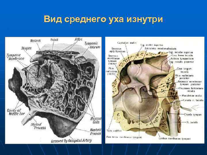 Вид среднего уха изнутри
