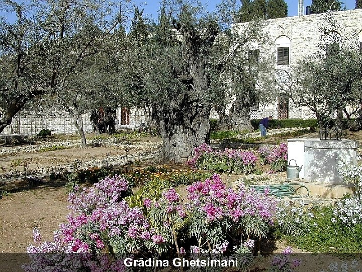 Grădina Ghetsimani