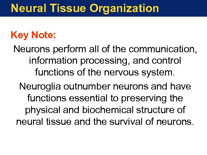 Neural Tissue Organization Key Note: Neurons perform all of the communication, information processing, and