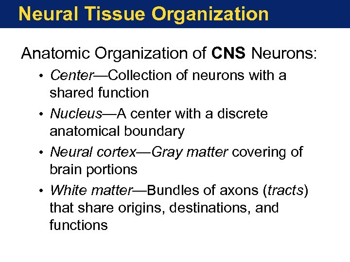 Neural Tissue Organization Anatomic Organization of CNS Neurons: • Center—Collection of neurons with a