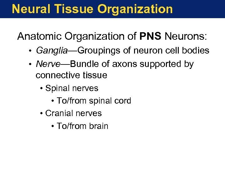 Neural Tissue Organization Anatomic Organization of PNS Neurons: • Ganglia—Groupings of neuron cell bodies