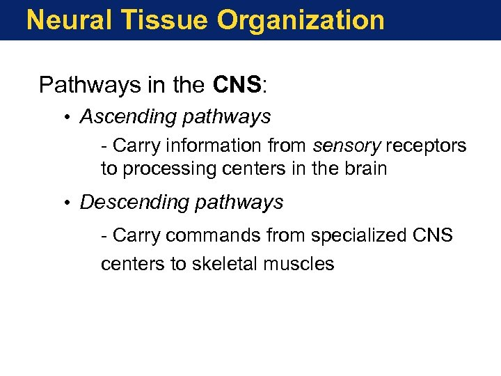 Neural Tissue Organization Pathways in the CNS: • Ascending pathways - Carry information from