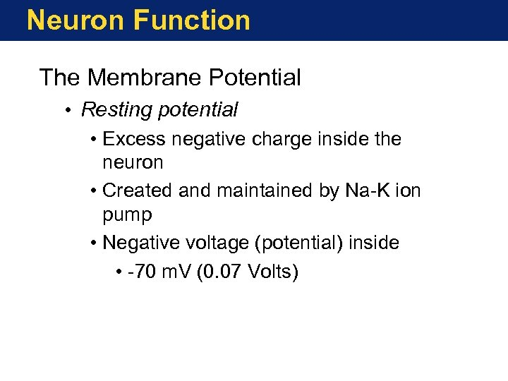 Neuron Function The Membrane Potential • Resting potential • Excess negative charge inside the