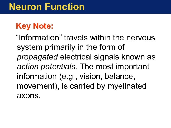 """Neuron Function Key Note: """"Information"""" travels within the nervous system primarily in the form"""