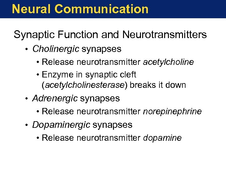 Neural Communication Synaptic Function and Neurotransmitters • Cholinergic synapses • Release neurotransmitter acetylcholine •