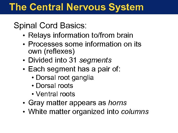 The Central Nervous System Spinal Cord Basics: • Relays information to/from brain • Processes