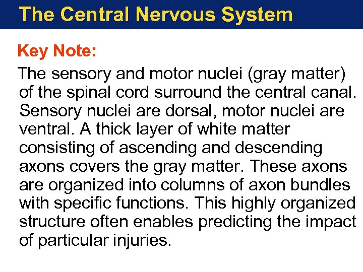 The Central Nervous System Key Note: The sensory and motor nuclei (gray matter) of