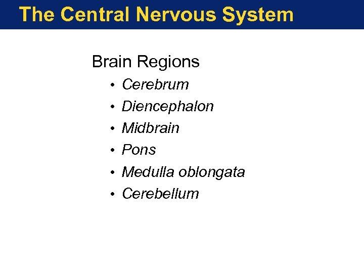 The Central Nervous System Brain Regions • • • Cerebrum Diencephalon Midbrain Pons Medulla