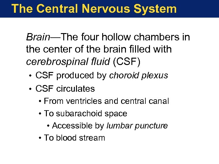 The Central Nervous System Brain—The four hollow chambers in the center of the brain
