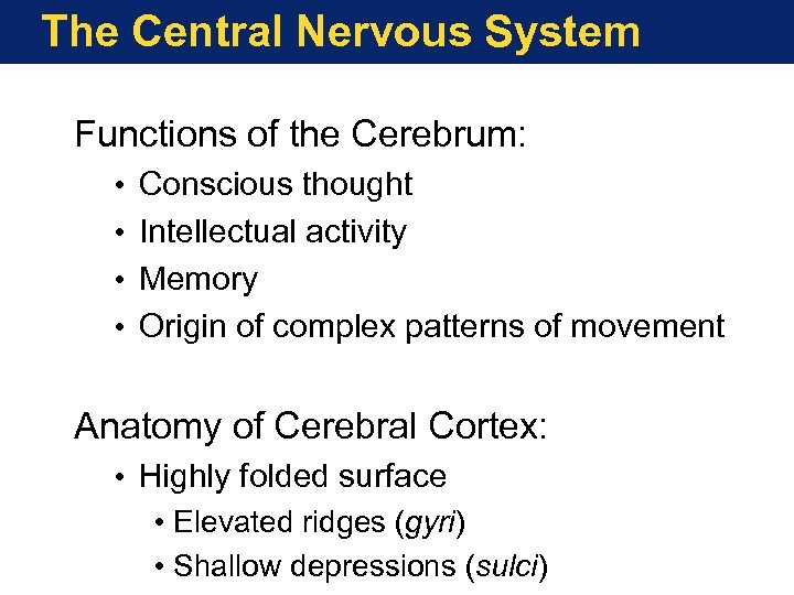 The Central Nervous System Functions of the Cerebrum: • • Conscious thought Intellectual activity