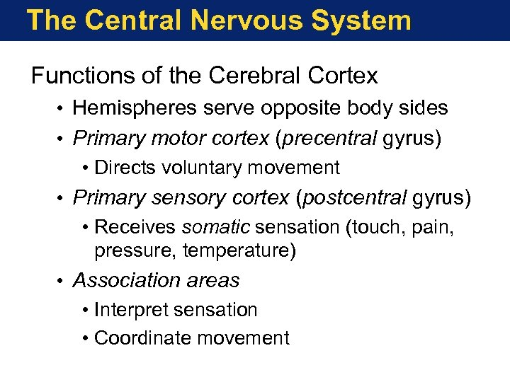 The Central Nervous System Functions of the Cerebral Cortex • Hemispheres serve opposite body