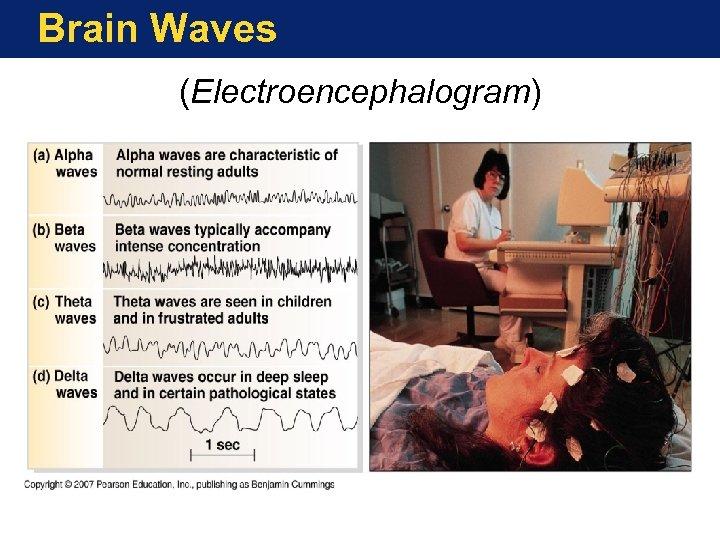 Brain Waves (Electroencephalogram)
