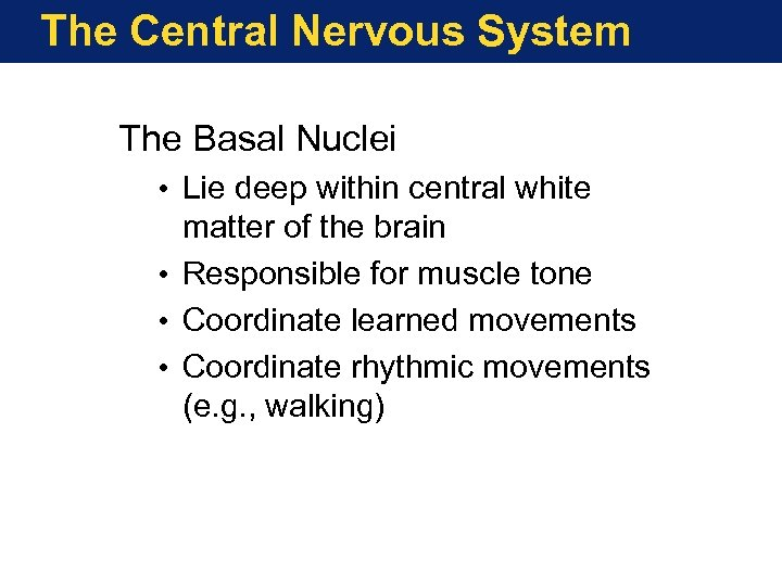 The Central Nervous System The Basal Nuclei • Lie deep within central white matter