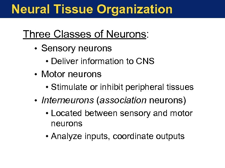 Neural Tissue Organization Three Classes of Neurons: • Sensory neurons • Deliver information to