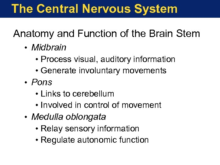 The Central Nervous System Anatomy and Function of the Brain Stem • Midbrain •