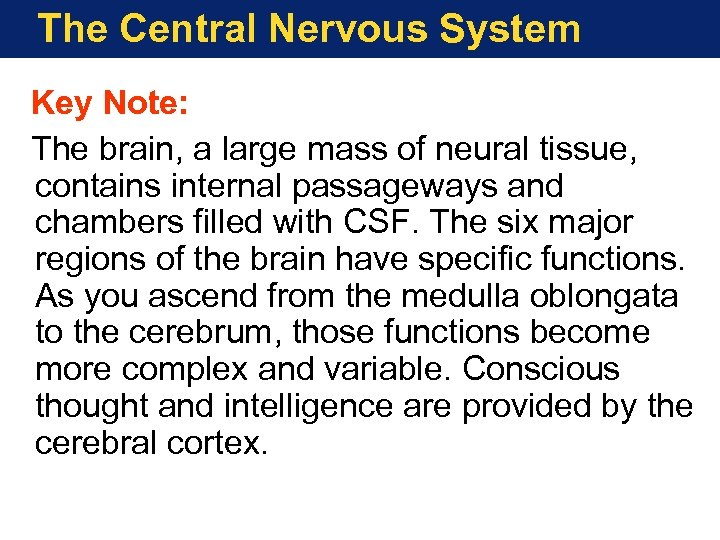 The Central Nervous System Key Note: The brain, a large mass of neural tissue,