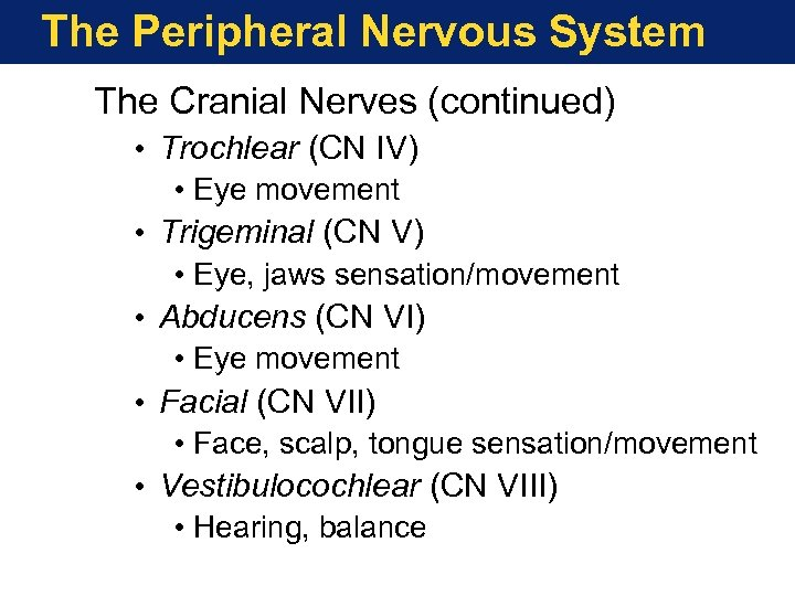 The Peripheral Nervous System The Cranial Nerves (continued) • Trochlear (CN IV) • Eye