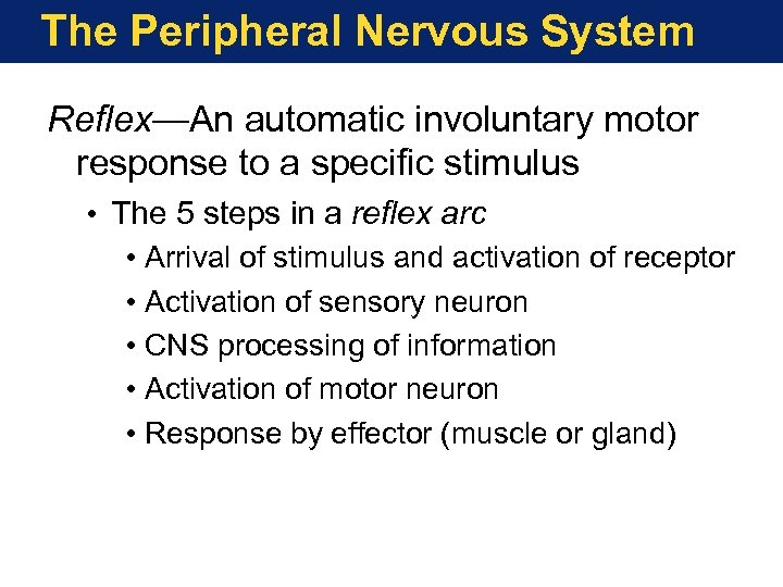 The Peripheral Nervous System Reflex—An automatic involuntary motor response to a specific stimulus •