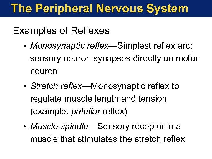 The Peripheral Nervous System Examples of Reflexes • Monosynaptic reflex—Simplest reflex arc; sensory neuron