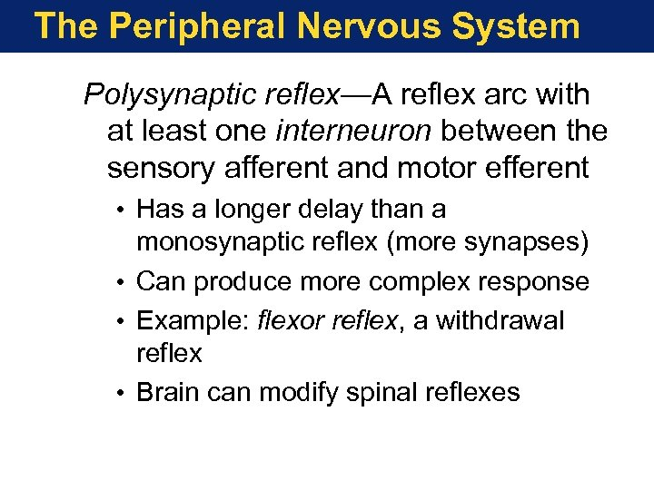 The Peripheral Nervous System Polysynaptic reflex—A reflex arc with at least one interneuron between