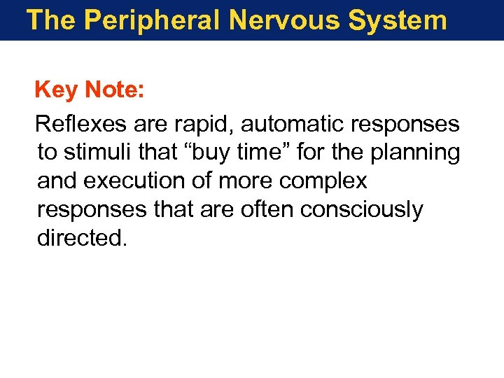 The Peripheral Nervous System Key Note: Reflexes are rapid, automatic responses to stimuli that
