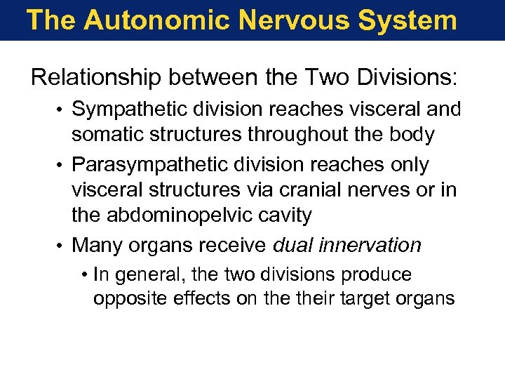 The Autonomic Nervous System Relationship between the Two Divisions: • Sympathetic division reaches visceral