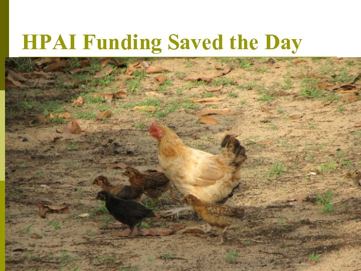 HPAI Funding Saved the Day