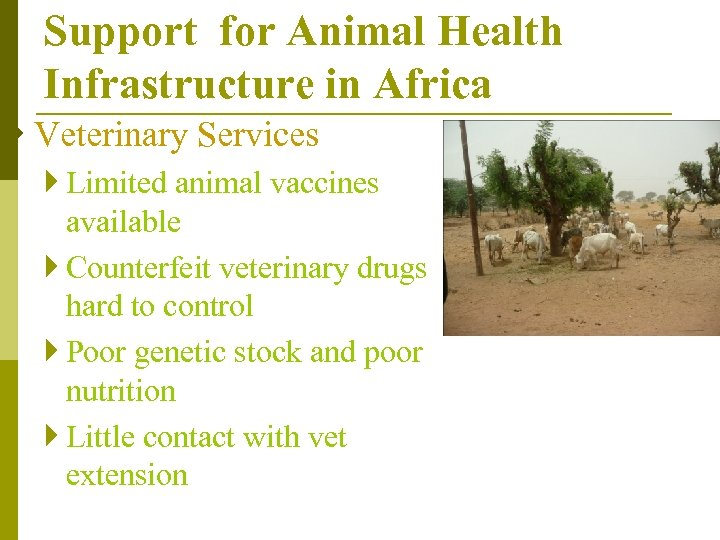Support for Animal Health Infrastructure in Africa } Veterinary Services } Limited animal vaccines