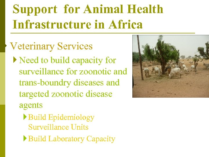 Support for Animal Health Infrastructure in Africa } Veterinary Services } Need to build