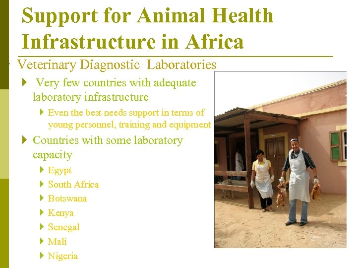 Support for Animal Health Infrastructure in Africa } Veterinary Diagnostic Laboratories } Very few