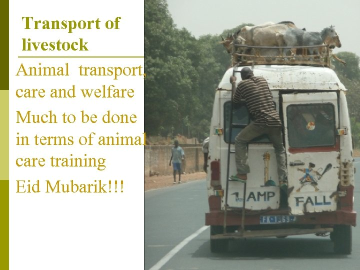 Transport of livestock Animal transport, care and welfare Much to be done in terms