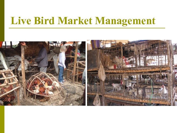 Live Bird Market Management