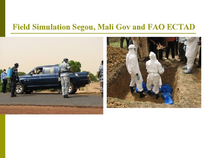 Field Simulation Segou, Mali Gov and FAO ECTAD