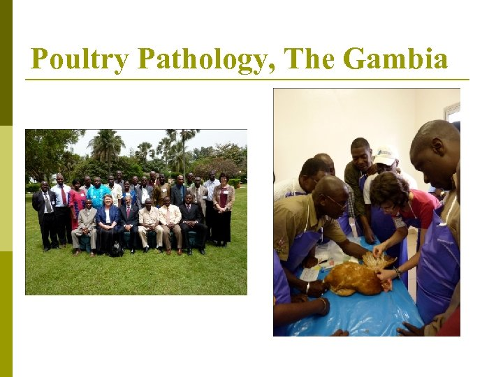 Poultry Pathology, The Gambia