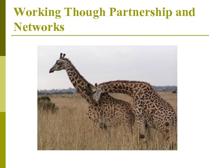 Working Though Partnership and Networks