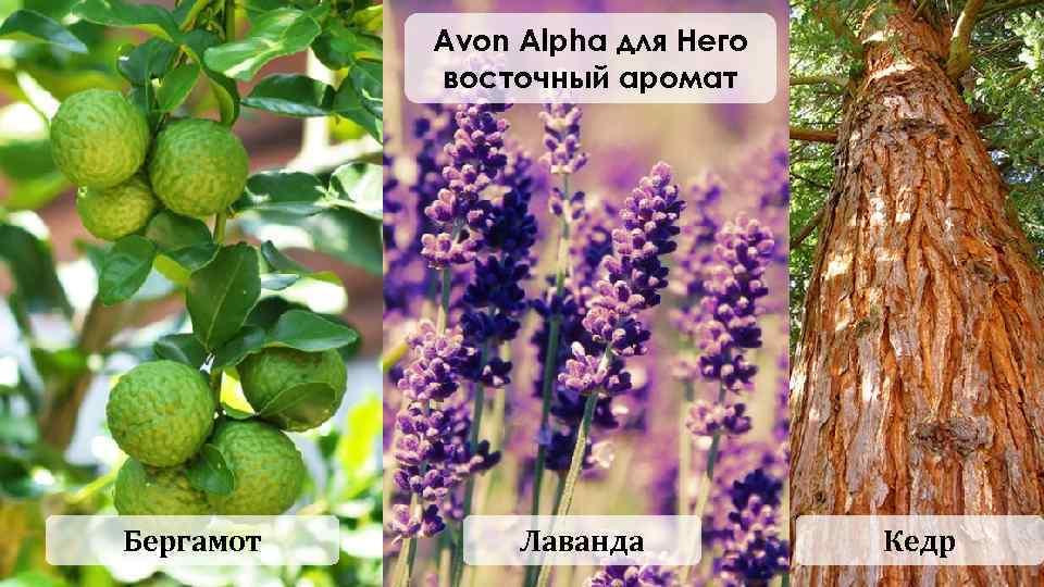 Avon Alpha для Него восточный аромат Бергамот Лаванда Кедр
